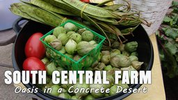 South Central Farm: Oasis In A Concrete Desert